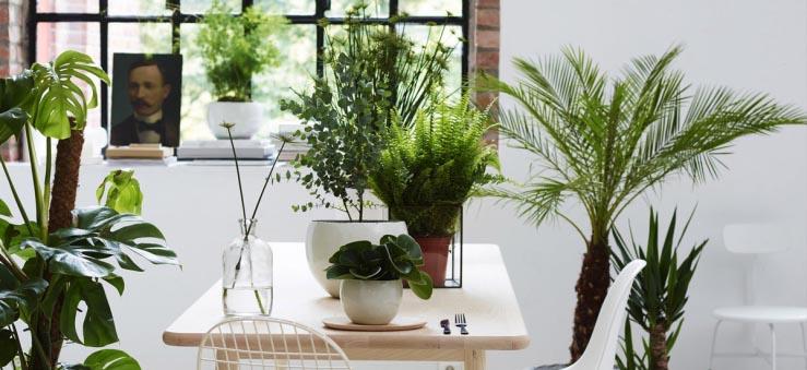 Planten in groepjes bij elkaar: zo doe je dat