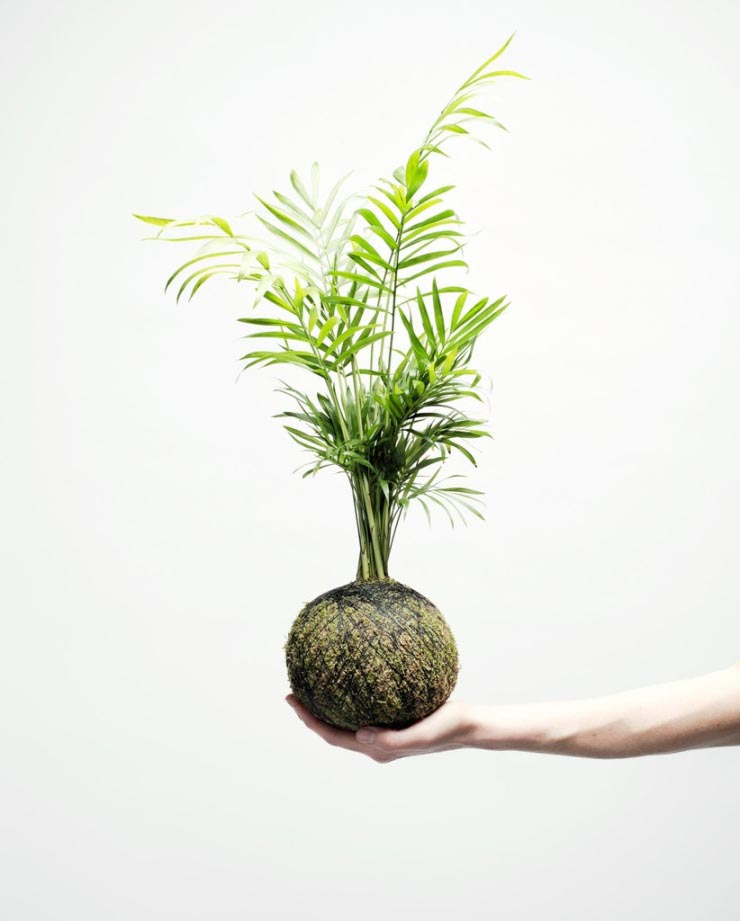 Liefde voor deze hangplantjes
