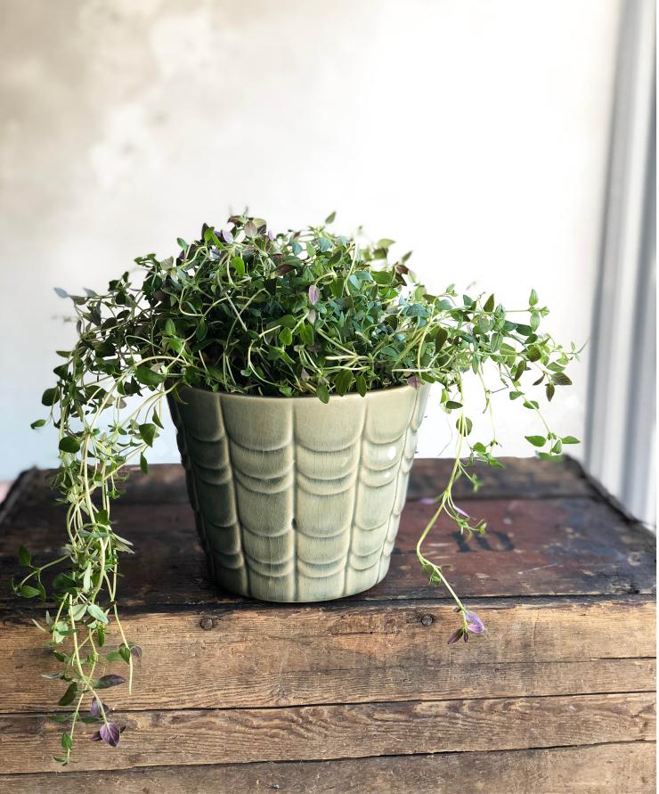 planten2