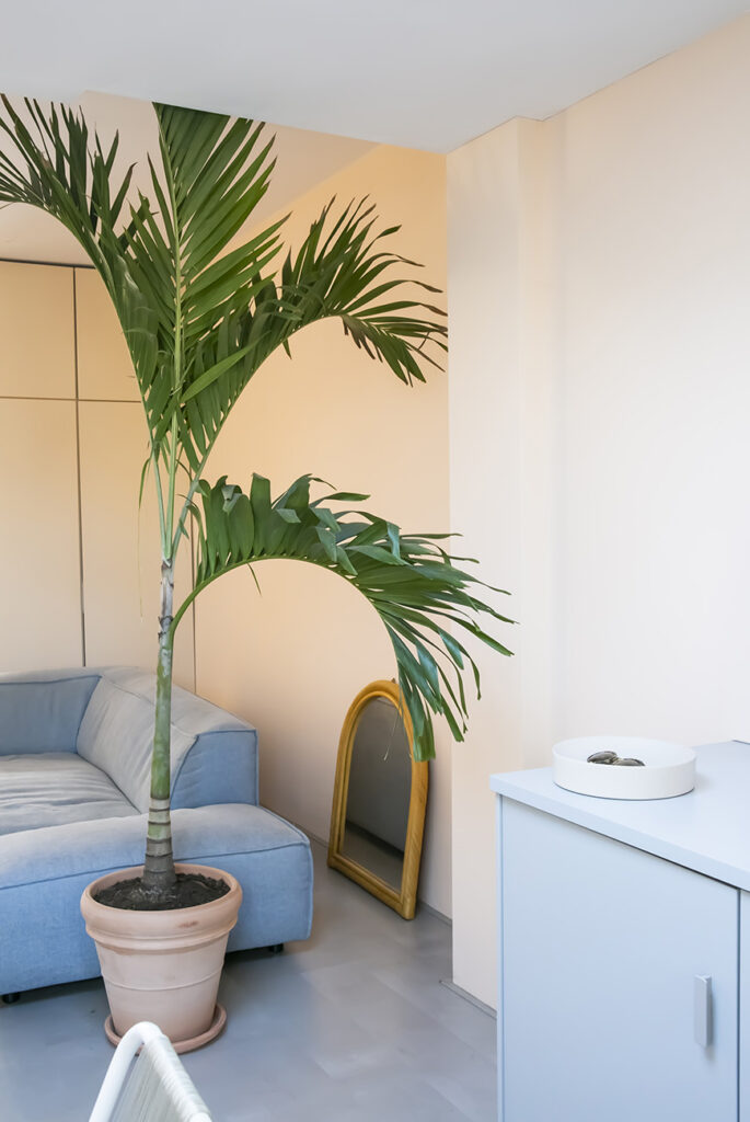 wooninspiratie palmboom in de woonkamer