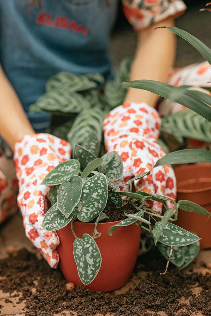 De Interior Junkie x Plantje.nl plantenbox is nu te koop!
